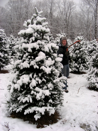 christmas tree chopping
